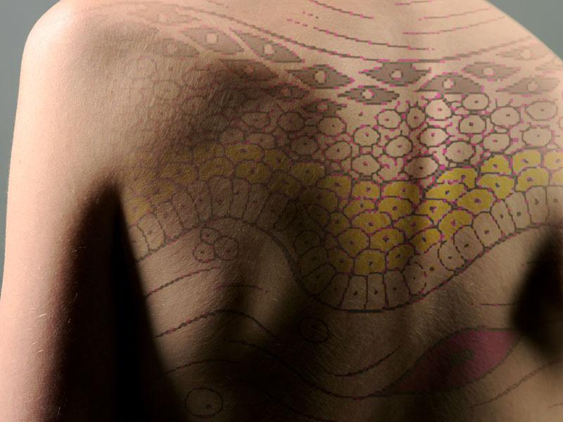 Rücken mit schematischer Darstellung des Hautaufbaus